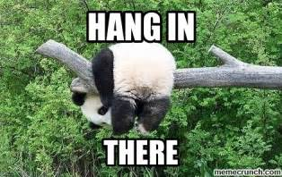 Hang In There Meme - good news for jj chicago bears board
