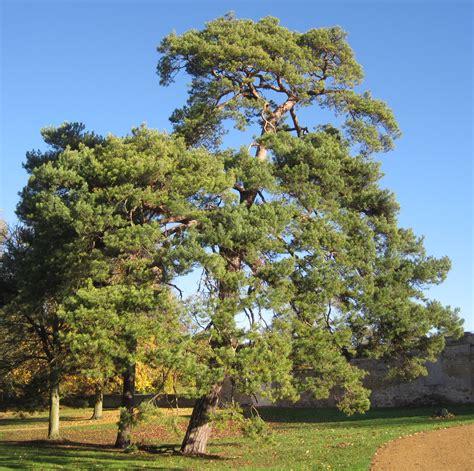 tree identification tree guide uk
