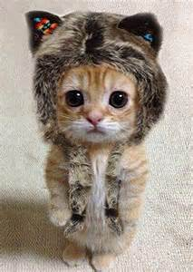 cat hat cats in hats are adorable slapped ham