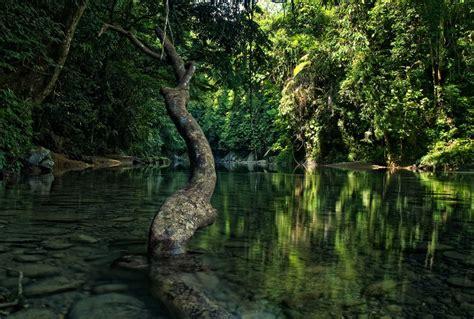 pemuda aceh cari solusi lindungi kelestarian hutan
