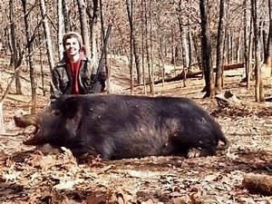 Wounded boar attacks forest ranger | Doovi