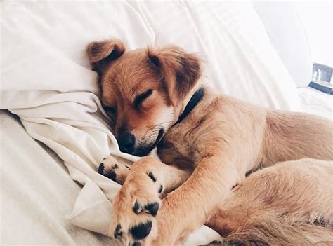 Sleep And Pets by Why You Should Let Dogs Sleep In The Bed Purewow