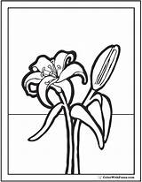 Coloring Lily Pdf Printables sketch template