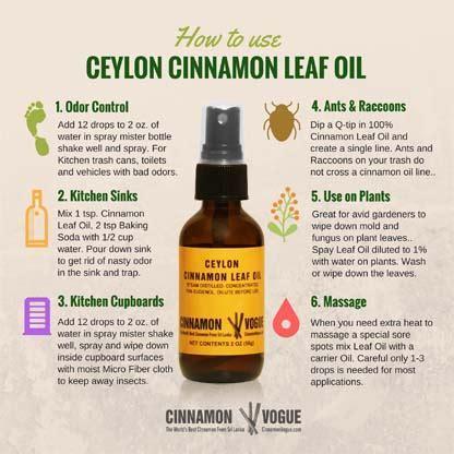 Ceylon Cinnamon Leaf Oil Uses   Cinnamon Vogue