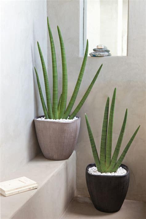 plante de bureau feng shui la plante verte d 39 intérieur archzine fr