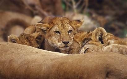 Wildlife Wallpapers Desktop Backgrounds
