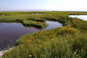 Celebrate Your Local Estuary