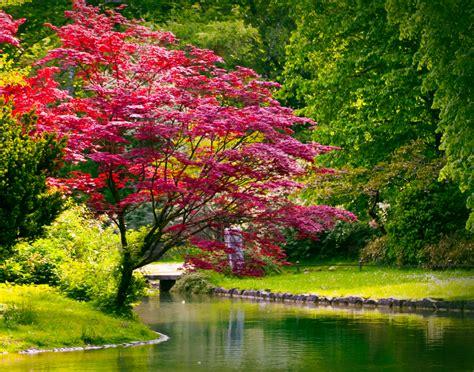 Japanischer Garten Sträucher by Roter Ahorn 187 An Diesem Standort F 252 Hlt Er Sich Am Wohlsten