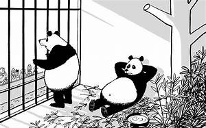 Mac on... Panda (or political) promiscuity   Daily Mail Online