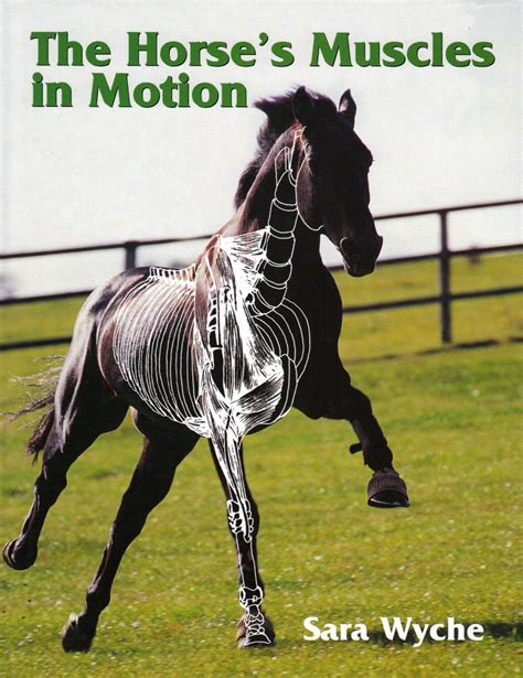 horse muscles motion sara wyche horses trot views