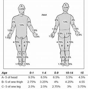 Lund And Browder Chart  With Age Appropriate Measurements