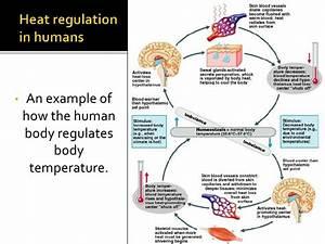 Thermoregulation And Osmoregulation  Bd