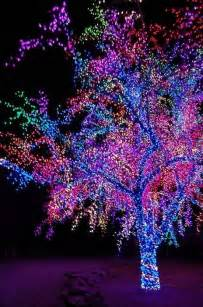 beautiful colorful tree pictures photos and images for