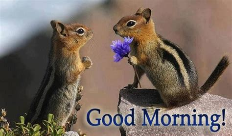 adorable spring squirrels good morning quote pictures