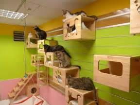 cat hotel ifurry