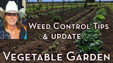 vegetable garden weed control tips  garden update