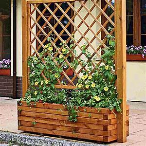 Pflanzkasten Mit Rankgitter Bauhaus : pergolapflanzkasten neapel herbstgold 210 x 220 cm bauhaus ~ Orissabook.com Haus und Dekorationen