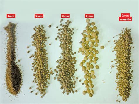 tilapia feed formulation  feeding technique