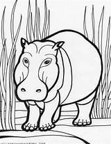 Coloring Pages Hippo Hippopotamus Animals Colouring Cartoon Print Cute Clipart Printable Animal Cliparts Sheet Safari Colour Fiction Non Clip Library sketch template