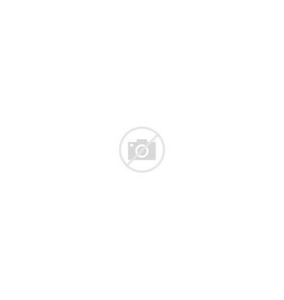 Plants Types Different Vector Kinds Plant Illustration