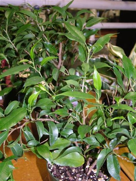 identifying house plants pictures