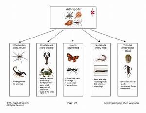 Animal Classification Chart