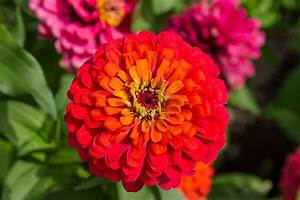 Welche Blumen Blühen Im August : welche blumen blhen im august cool nachtviole hesperis matronalis blte juniaugust cm with ~ Orissabook.com Haus und Dekorationen