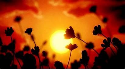 Sunset Animated Gifs Flowers Orange Wind Wildflower