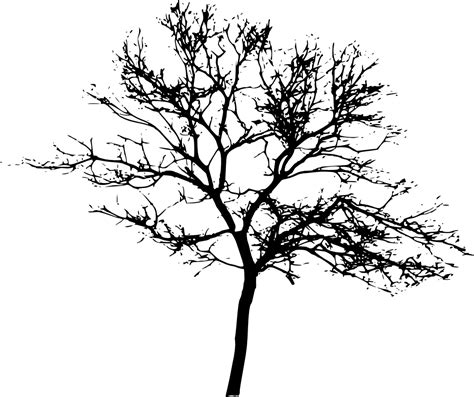 Tree Images No Background by 10 Tree Silhouettes Png Transparent Background Onlygfx