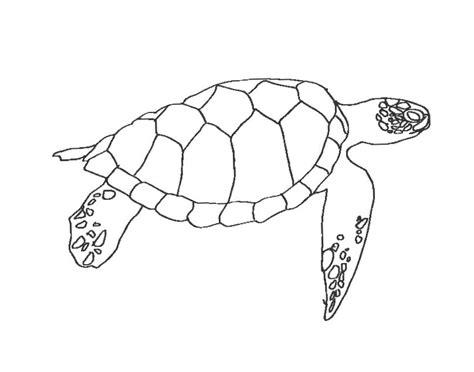 turtle template happy sea turtles the everyday