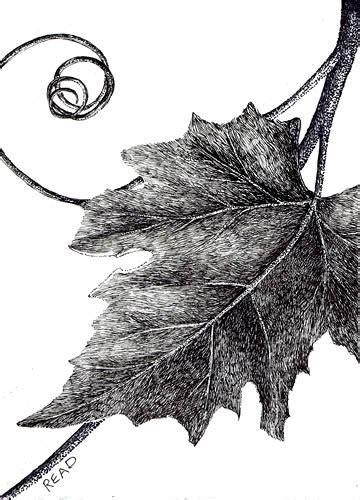 Brushstrokes Etc Pen And Ink ~ Grape Leaf