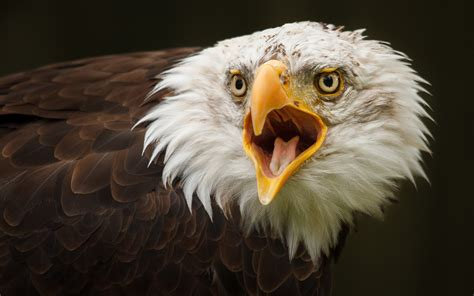 shocked eagle bird awesome picture hd wallpapers rocks