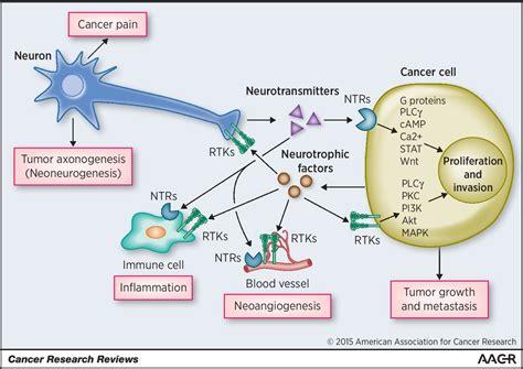Nerve–Cancer Cell Cross-talk: A Novel Promoter of Tumor