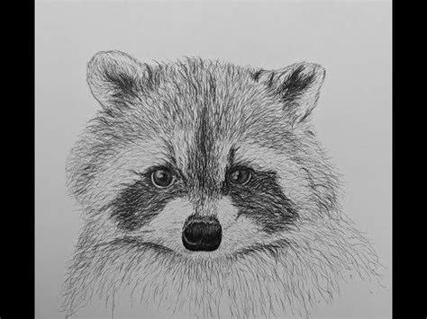 draw  raccoon easy youtube  images