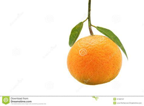 Single Orange Fruit With Leaf Isolated White