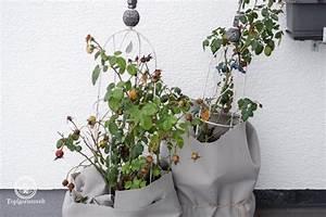 Alpenveilchen Gießen Wie Oft : wie oft muss man topfpflanzen drau en im winter gie en ~ A.2002-acura-tl-radio.info Haus und Dekorationen