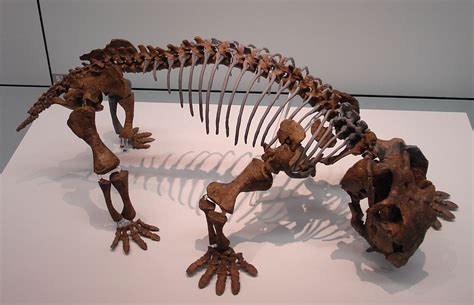 Paleontology, Books And Other