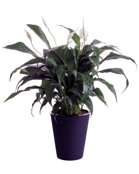 indoor plants low light indoor plants low light hgtv