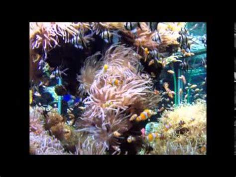 le carnaval des animaux l aquarium sa 235 ns aquarium le carnaval des animaux piano