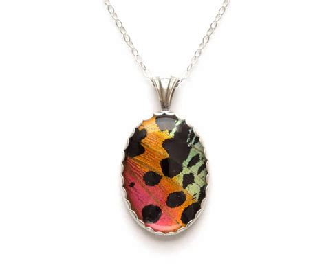 Sunset Jewelry Real Madagascan Sunset Moth Necklace Bug Under Glass