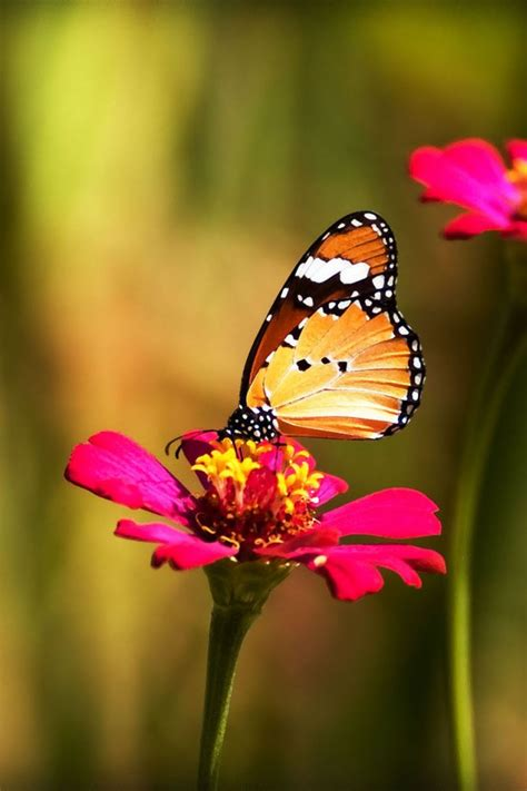 We hope you enjoy our growing collection of hd images. 30 COLORFUL BUTTERFLY WALLPAPERS FREE TO DOWNLOAD........ - Godfather Style