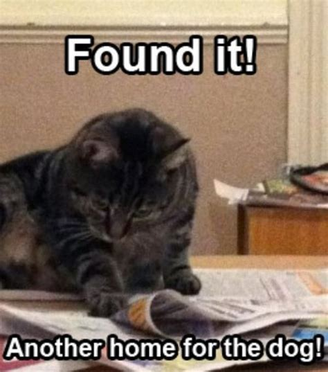 funny animal captions part   pics amazing