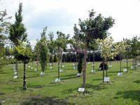 Schlanke Bäume Für Kleine Gärten : kleinkronige b ume f r kleine g rten ~ Michelbontemps.com Haus und Dekorationen