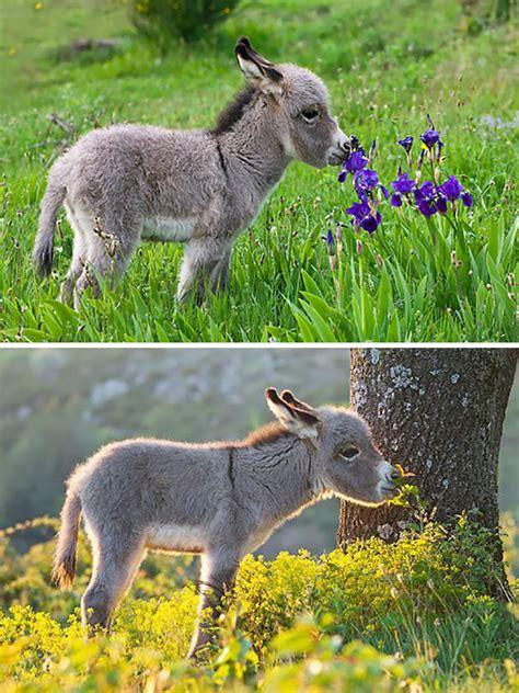 burros bebes  te alegraran  estas teniendo  mal