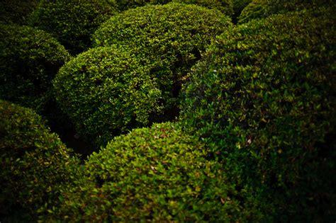 images of shrubs plants hills of bushes by henrikholmberg on deviantart
