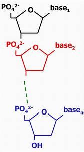 Nucleic Acid Rna