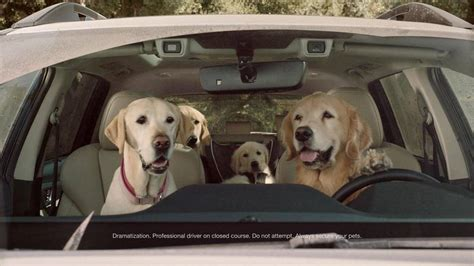 forget  ascent  subarus  ads   cute dogs