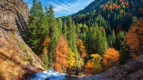autumn forest tablet wallpaper  hd
