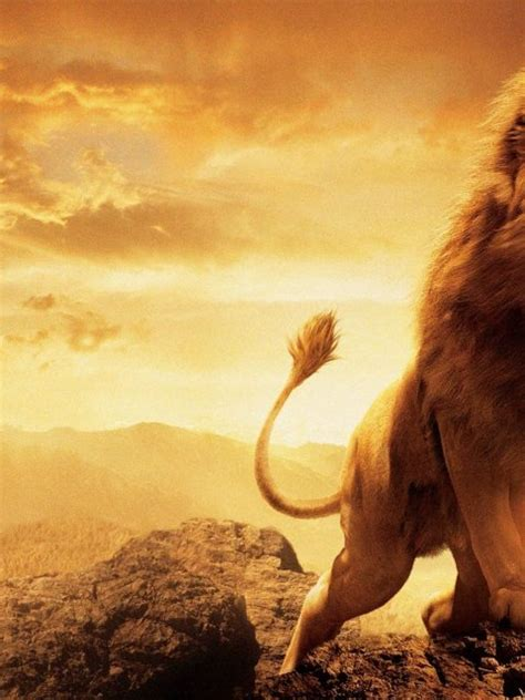 hd lion wallpapers widescreen  hd wallpapers