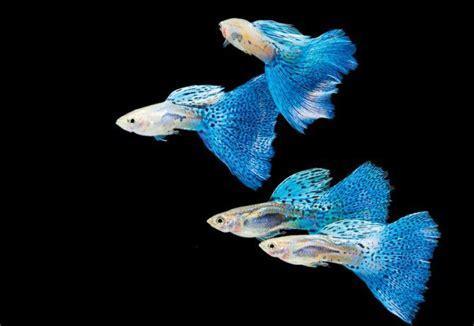 kinds  fish   put   fish tank